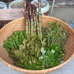 春の山菜で体にいい美味しいレシピを作ってみよう!
