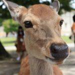 奈良のお土産の定番。かわいい鹿グッズ!
